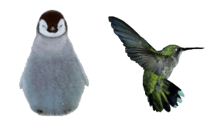 Google Penguin and Hummingbird